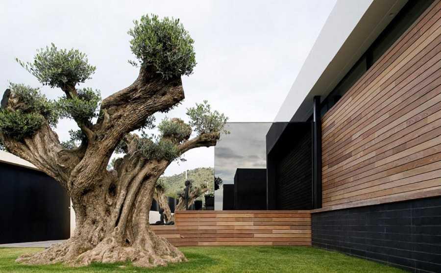 ландшафтный-дизайн-участка-современного-частного-дома-фото-window-house-by-ladaa